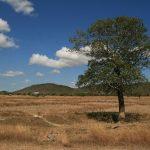 L'arbre et les nuages