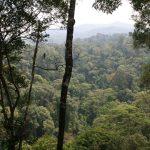 Jungle à perte de vue