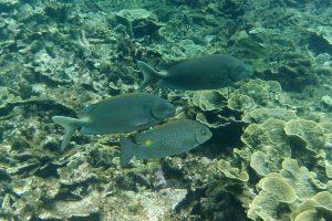 Groupe de poissons (snorkeling)