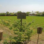 Secteur d'Arashiyama