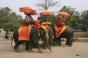 Kraal des éléphants