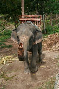 Dumbo vous salue