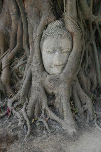 Buddha prisonnier au Wat Mahathat