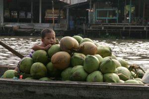 Le gardien des noix de coco