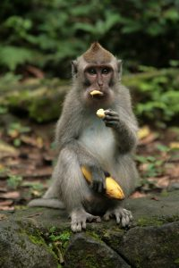 Laissez moi manger ma banane