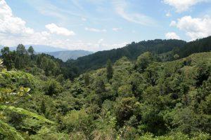 Forêt batak