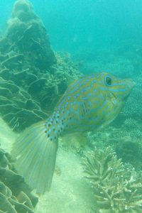 Snorkeling aux Perhentian