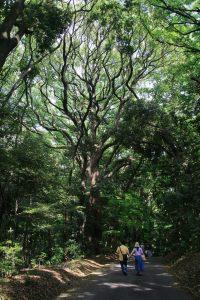 Parc du Meiji Jingu
