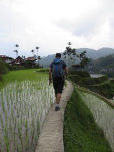 Tibal dans les rizières