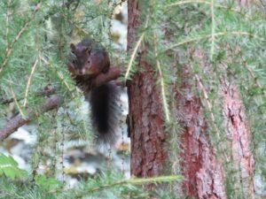 Voisin écureuil